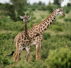Wallpapers - Wild Africa