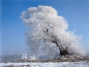 Wallpapers - Nature - Beaituful Winter