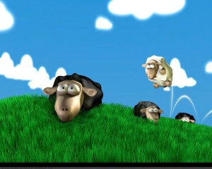Funny Sheep Wallpaper | High Resolution 1600 x 1200