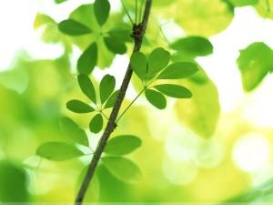 Vista Plant Wallpaper   High Resolution 1600 x 1200
